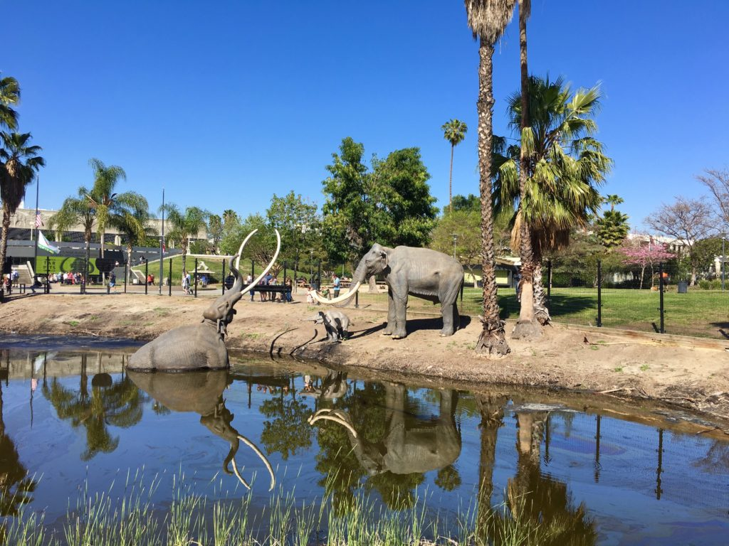 Where to park your charter bus rental at the Labrea tar pits in Los Angeles.