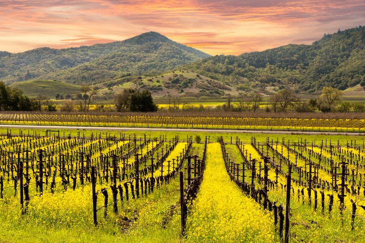 San Francisco charter bus rentals to Napa Valley.
