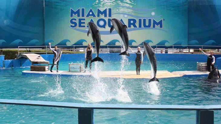 Miami charter bus rentals to Seaquarium