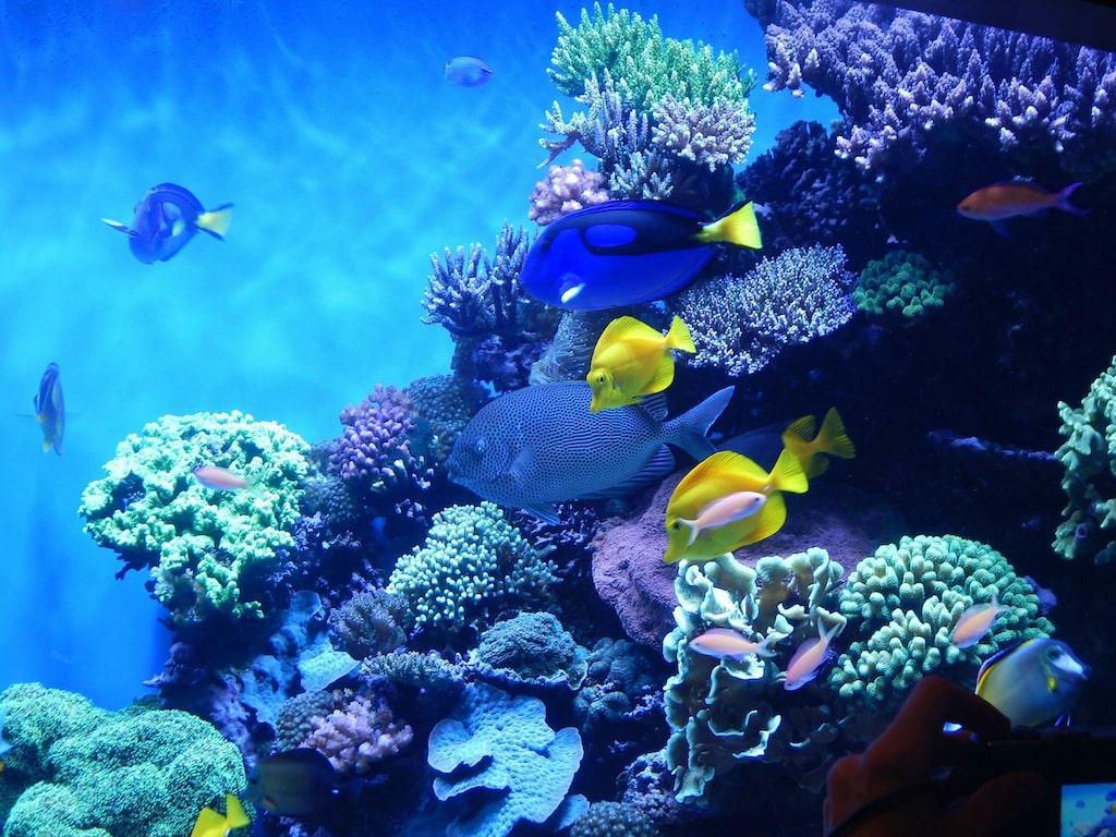 Aquarium of the Bay charter bus rentals