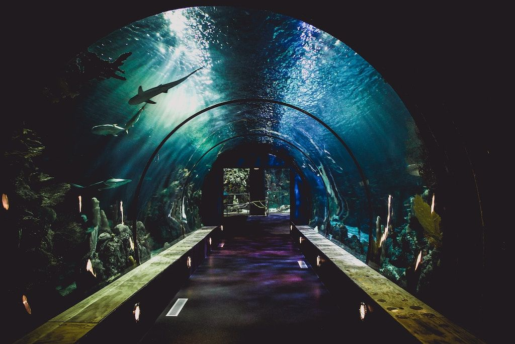 Charter a bus to Santa Monica Pier Aquarium