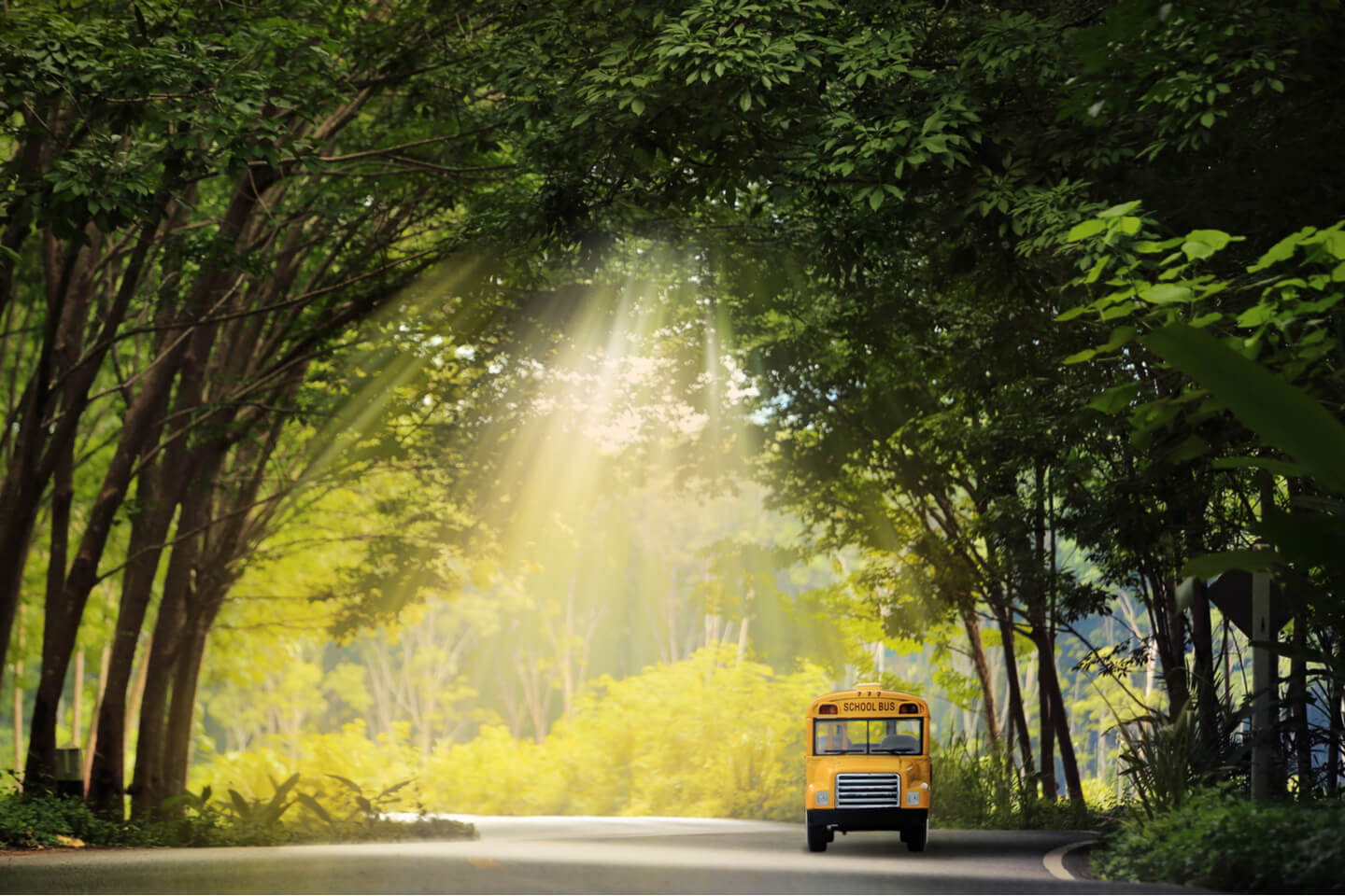 School Bus Rental Pricing Guide